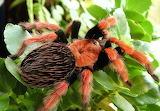 #Poisonous Spider