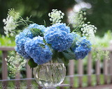 ^ Blue hydrangea with Queen Anne's lace arrangement