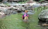 Mile 0703 Trail Dog Moodee Takes A Dip