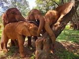 Group Hug ~ Nairobi
