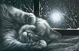 Sieste de chat