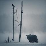 Madamma tumblr kecskekvit Bear