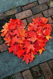 Red Fall Heart of Leaves