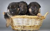☺ Cute puppies...