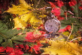 Pocket watch, leaves