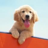 Happy Puppy...