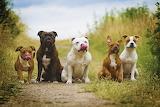 Dogslickinglips
