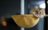 Cat collektion1w (26)