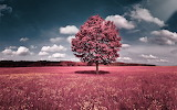 Pink solitude