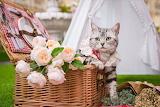 Cat, picnic basket