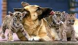 Милая семейка