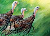 Fw11nwstamp-turkeys