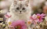 Cute-Kitten-kittens-16122868-1280-800