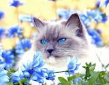 Blue eyes & blue flowers