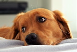 #Cuddle Me