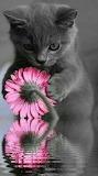 Sweet kitten with flower