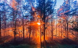 sunset in the forest nature