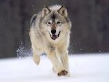 Running Wild...
