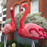 Rein-carnation-ed Flamingos