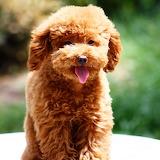 ☺Teddy Dog...