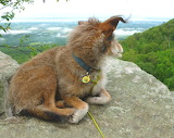 Mile 1146 Trail Dog Muggles Takes In The View At Table Rock
