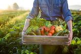 ^ Fresh harvested vegetables