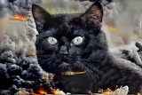 Stormy Black Cat