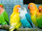 Colorful-world-of-birds-wallpapers