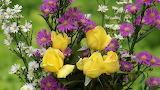 Yellow roses-dsc