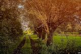 Słońce w wierzbach zachodzi-foto-Ewa Maciejczyk