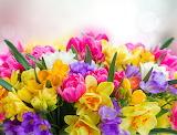 ^ Freesia Daffodils Tulips