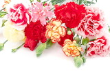 ^ Carnations ~ Flower of January