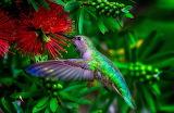 bird+flower