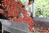 healthy food-red habanero
