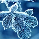 *Frozen Leaves...