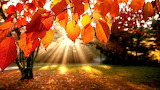 #Autumn Leaves