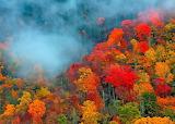 Appalachian-Mountains-Autumn-Forest-Foliage-Fog