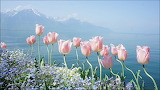 Flores frente al mar