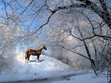 Clydsdale Horse Checking Out the Winter Scenery