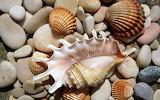Caracoles de mar 7