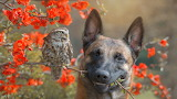 Flowers, branches, nature, owl, bird, Bush, dog