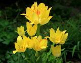 Wiele kwiatów na jednej łodyżce