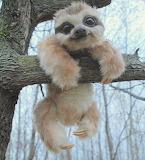 Happy baby sloth