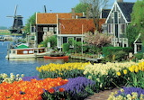 Colorful Dutch Tulips, old houses and windmills