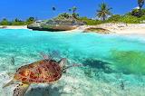 Turtle-paradise