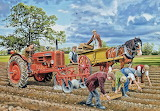 Harvesting Potatoes - Trevor Mitchell