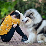 Dog with pet
