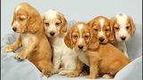 ☺ Sweet little puppies...