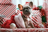 Beautiful dog decorated for Christmas