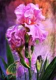 #Pink Goddess by Carol Cavalaris